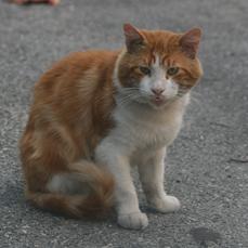 Pacha et le drame des chats errant