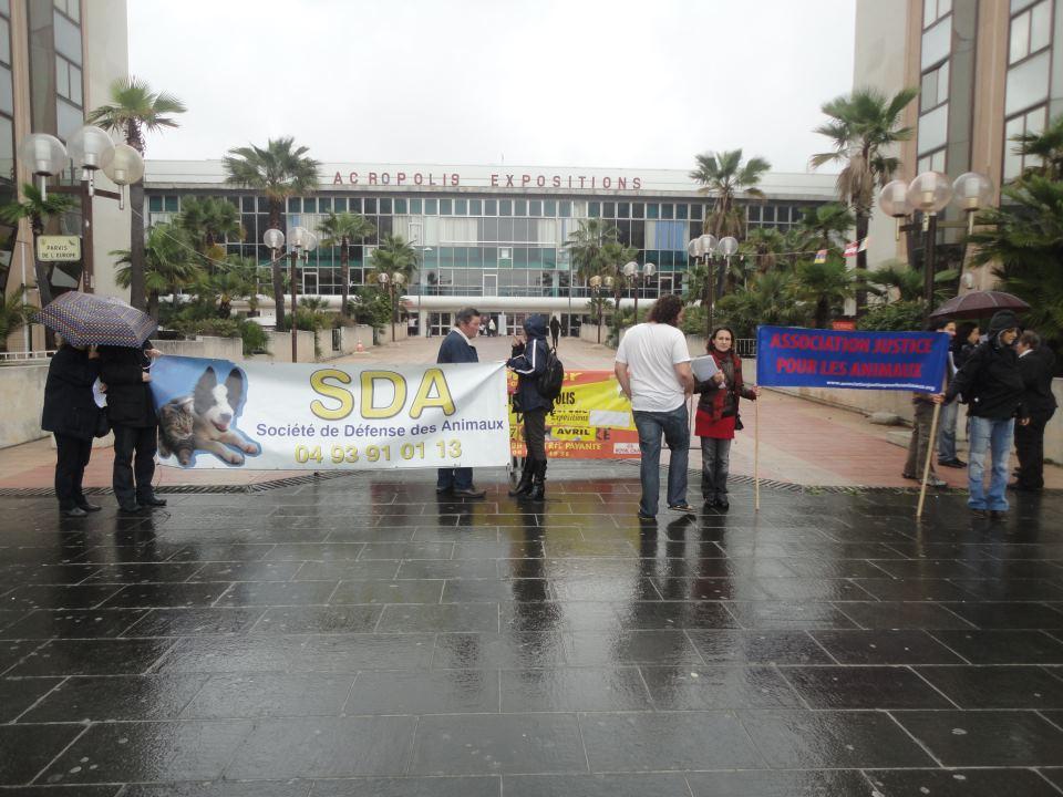 Manifestation contre le salon du chiot nice ajpla for Le salon du chiot